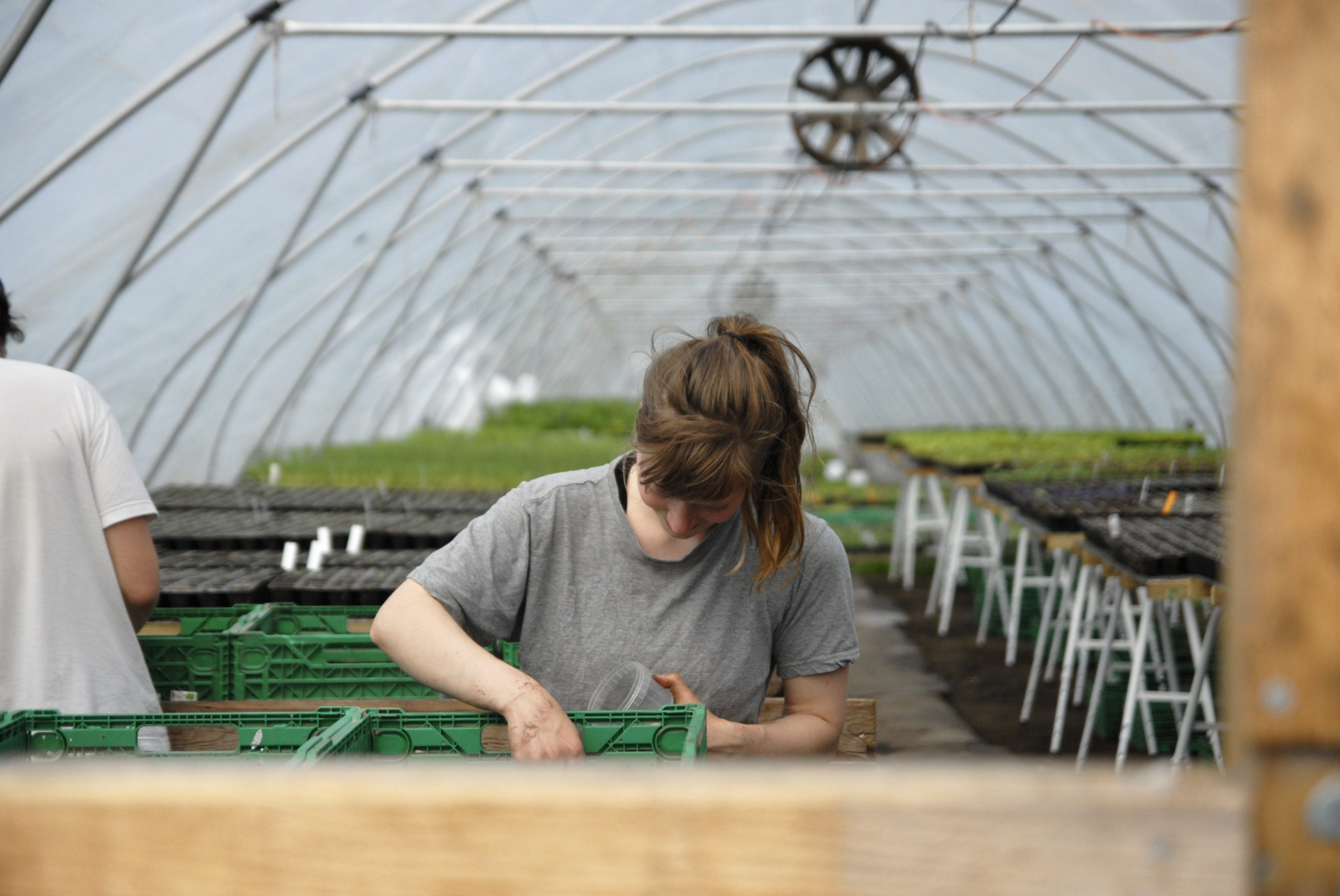Preserving Seeds at Farm of Ideas